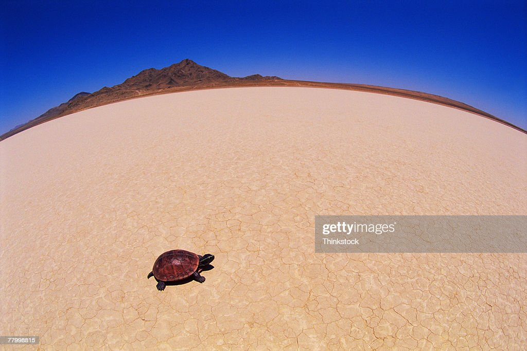 Turtle walking across a desert landscape