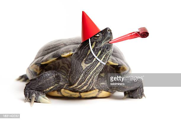Turtle Wearing Party Hat And Blower