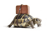 Turtle with suitcase on a back. Selective Focus.