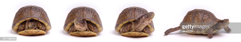 Turtles: Get Up and Go!