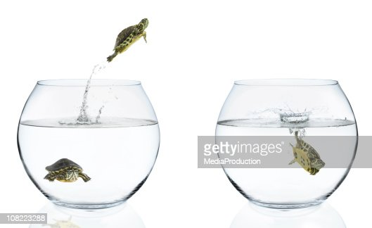 Turtles Jumping From Fishbowls : Stock Photo