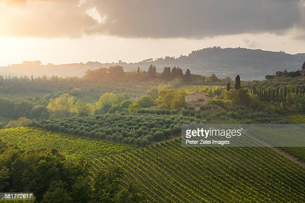 Tuscan landscape at sunset