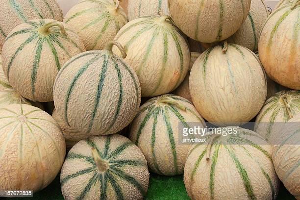 Toskanische Melone Cantalopes im Farmers Market