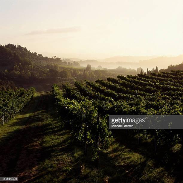 Tuscan morning sun