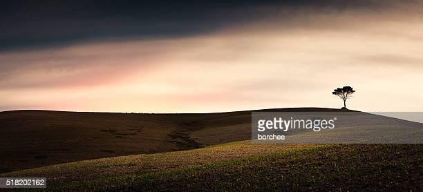 Tuscany Felder mit einsame Baum