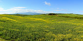 Tuscany hills landscape with yellow flowers on green fields, Italy
