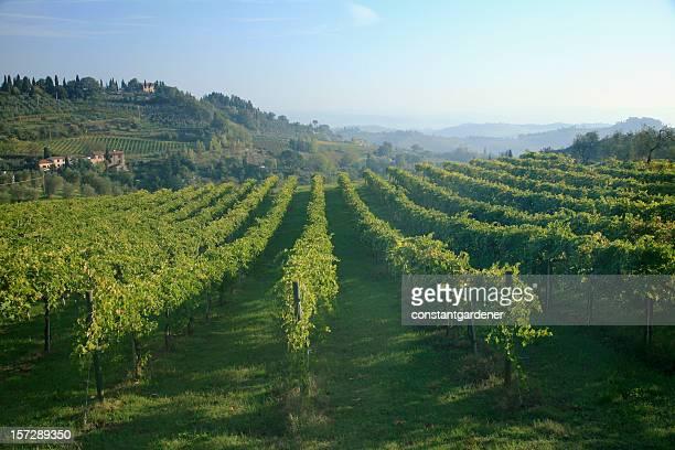 Tuscany Italy And San Gimignano Vineyards