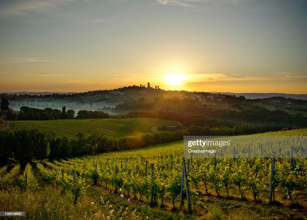 Tuscany landscape : Stock Photo