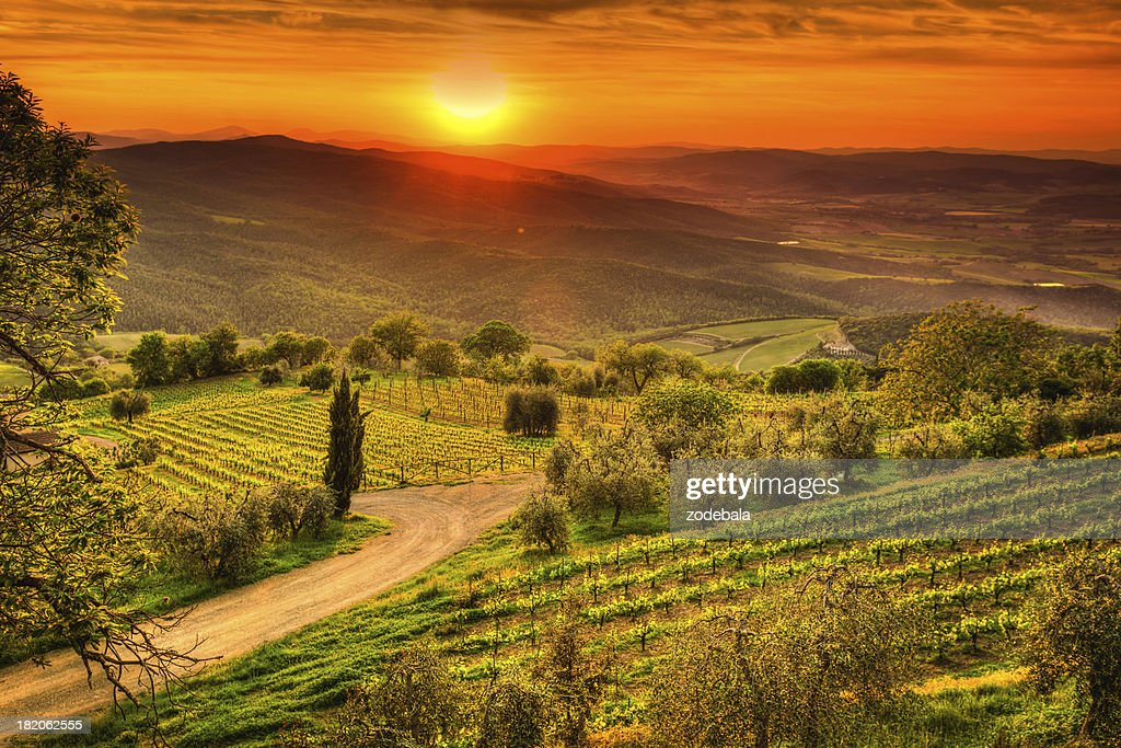 Belvedere House Olive Trees And <b>Vineyards At Sunset</b> San Quirico ...