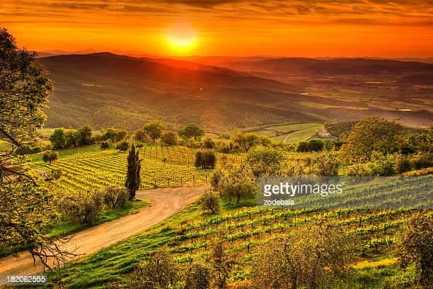 Tuscany Landscape with Vineyards at Sunset, Chianti Region, Val d'Orcia