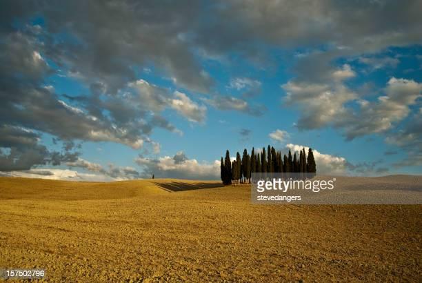 Toscana Val d'Orcia alberi