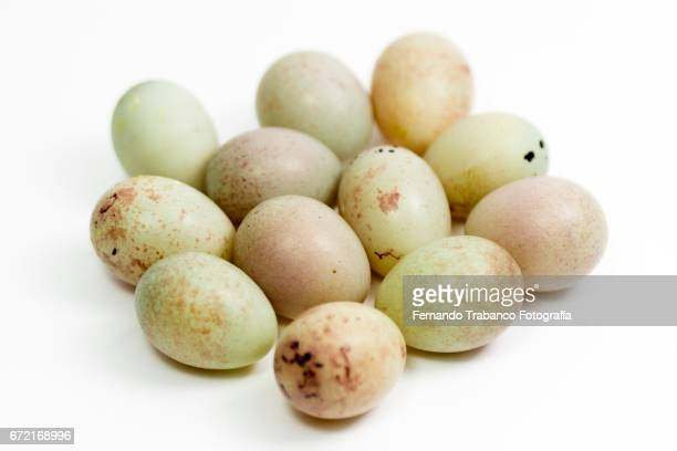 twelve small canary eggs