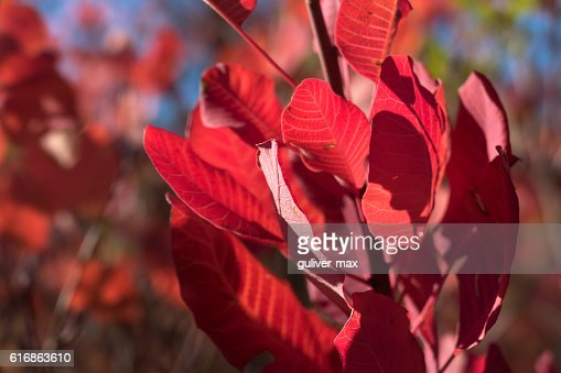 Twig with red leaves : Stock Photo