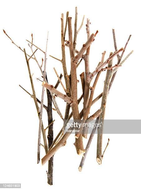Twigs и палки Изолирован на белом