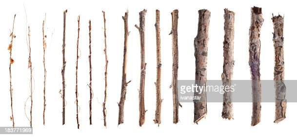 Twigs and Sticks Isolated on White