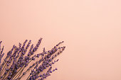 Twigs of Lavender Flowers Arranged in Lower Border on Solid Pink Background. Easter Mother's Day Wedding Wellness Cosmetics Concept. Minimalist Style. Website Banner Template