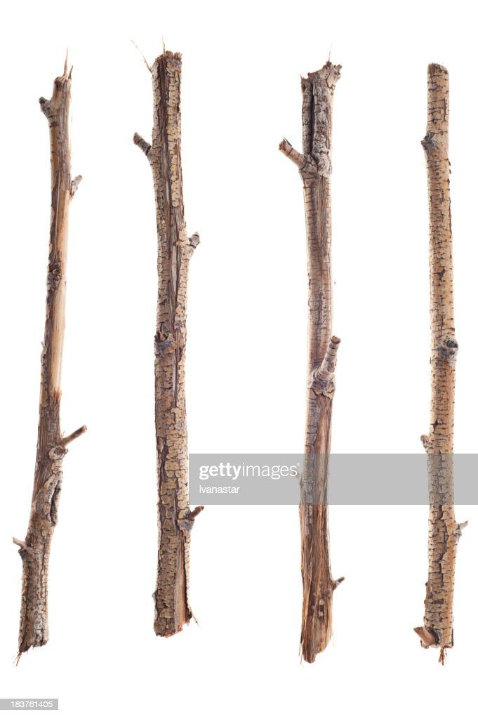 'Twigs, Sticks and Branches Isolated on White'
