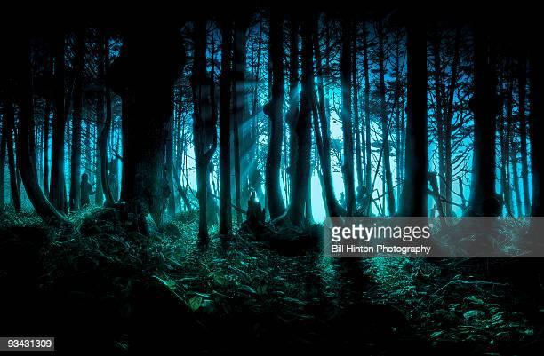 Twilight forest light mist