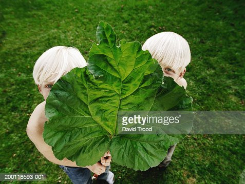 Twin brothers (6-8) peering around rhubarb leaf, portrait : Stock Photo