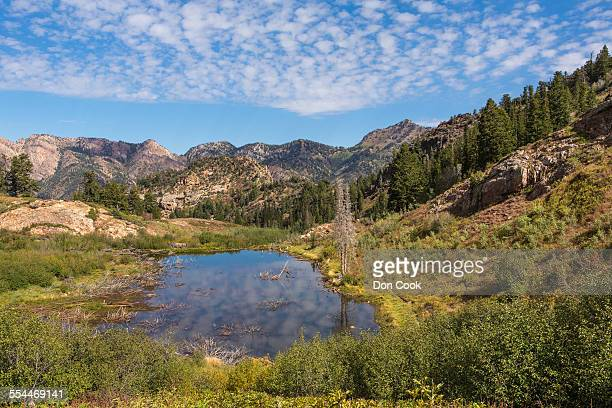 Twin Peaks Wilderness, Wasatch Mountains, Utah