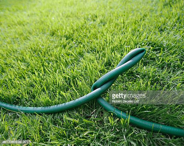 Twisted garden hose on lawn, close up
