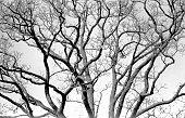 twisted old tree (closeup)