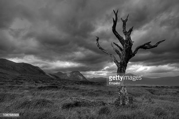 Trenzado árbol bajo vehemente cielo en Rannoch Moor.