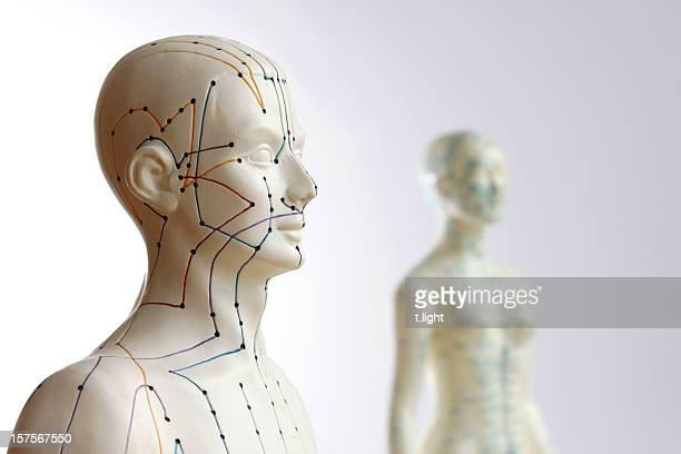 Due modelli di agopuntura-concentrarsi sul maschio