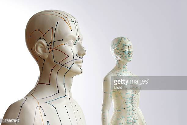Two acupuncture models - male and female