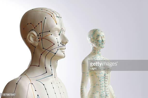 Due modelli di agopuntura-maschio e femmina
