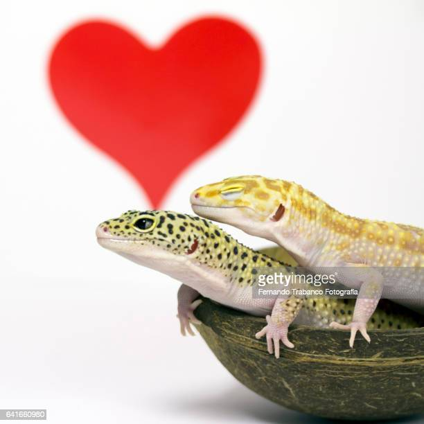 Two animals in love with red heart (squared format)