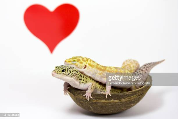 Two animals in love with red heart