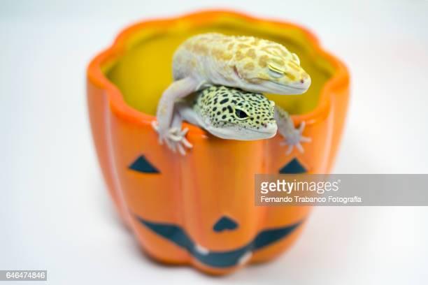 Two animals inside a Halloween pumpkin