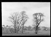 Two bare trees in an empty field with unidentified houses in the background New York New York late 19th or early 20th century