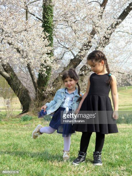 Two beautiful sisters 3 years and 5 years old holding hands and standing under a Cherry Blossoms Tree.