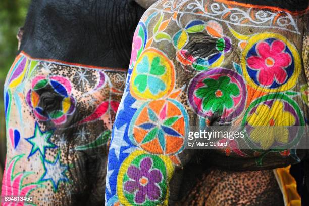 Two beautifully painted elephants at the Elephant Festival, Jaipur Elephant Festival, Rajasthan, India