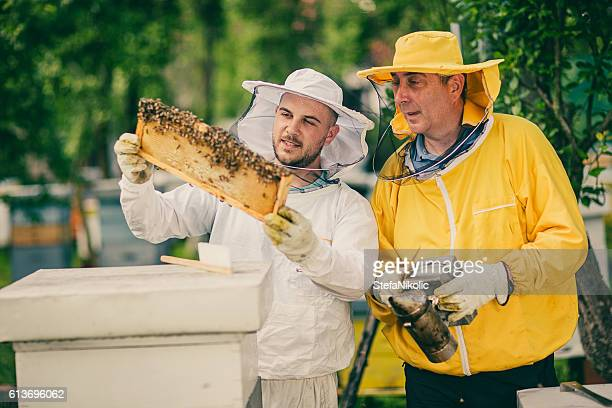 Two beekeepers checking the honeycomb of a beehive