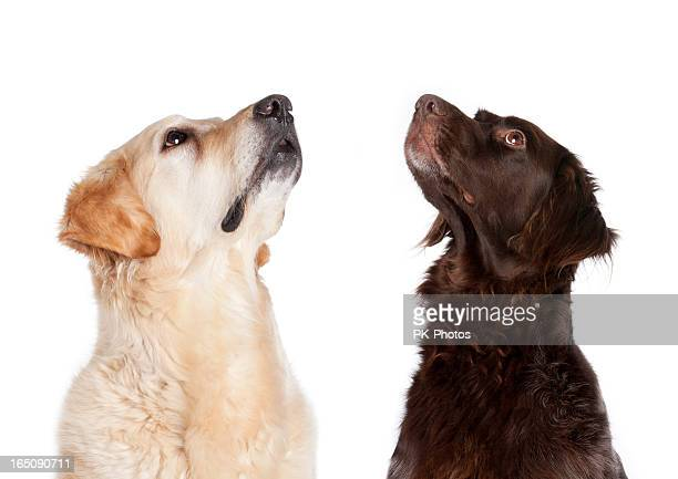 Two begging dogs
