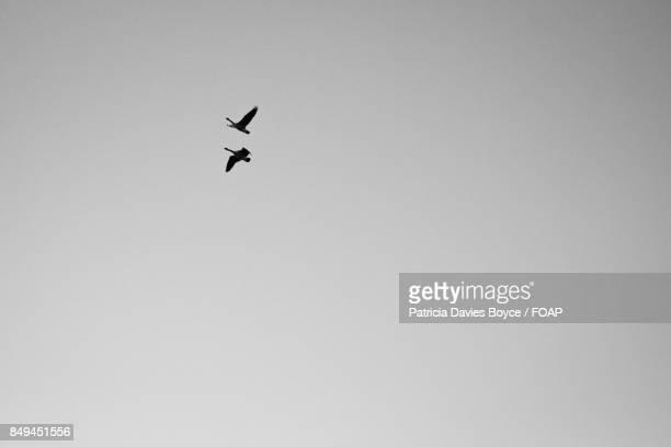 Two bird flying in sky