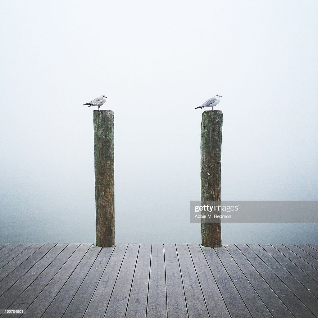 Two birds in the fog