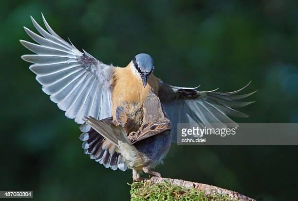 Zwei Bird's