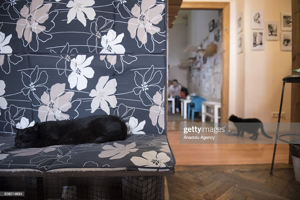 Two black cats are seen at the Cat Caffee, Krowoderska 48, Krakow, Poland on May 4, 2016. The Cat Coffee is an attraction for the cat lovers and it is open since the end of June 2015 and has six cats. Two of the cats came from the ' Kocia Academia' fondation and the other four cats were or found on the street.