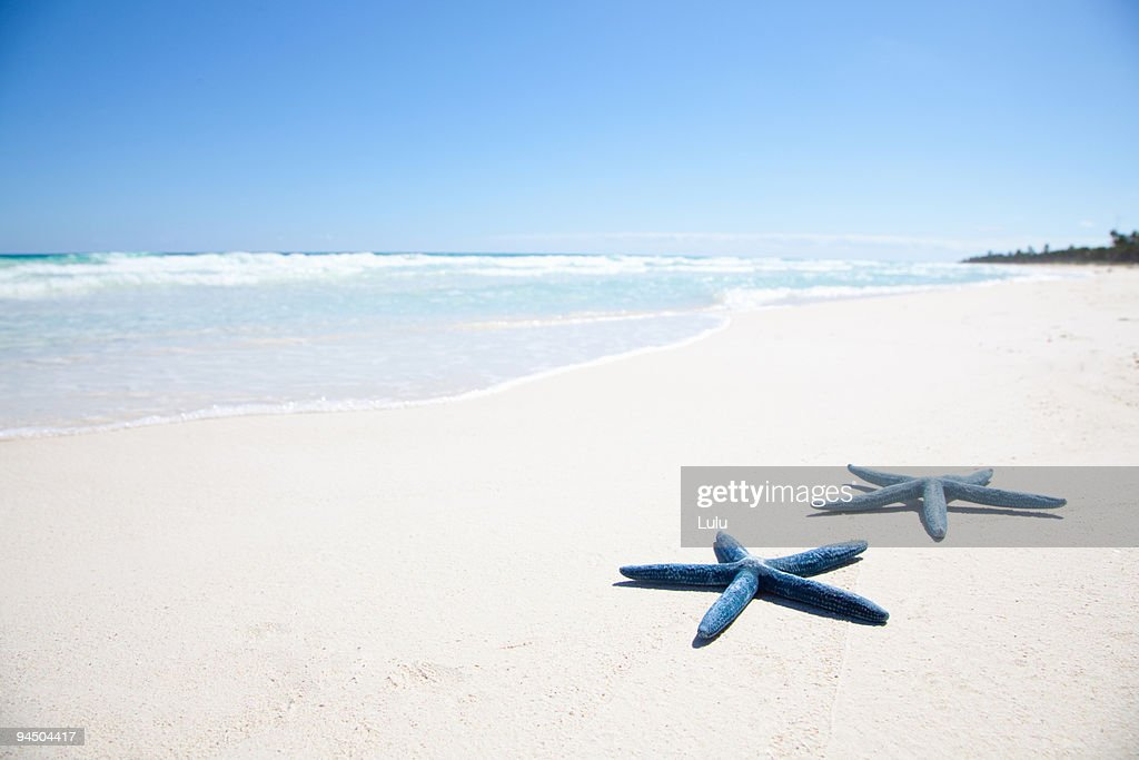 Two blue starfish on tropical beach : Stock Photo