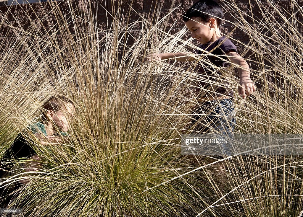 Two Boy (8-10) play in tall grass in backyard : Stock Photo