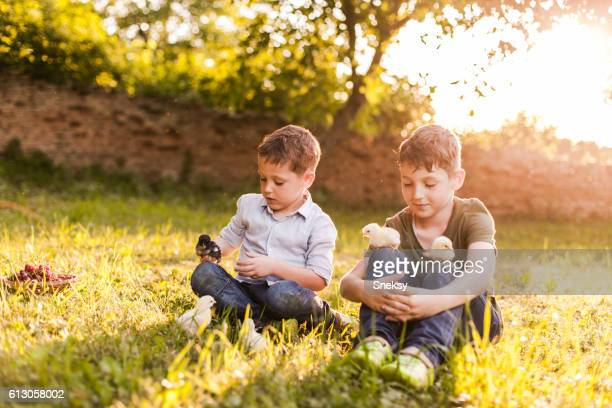 Two boys and baby chicks