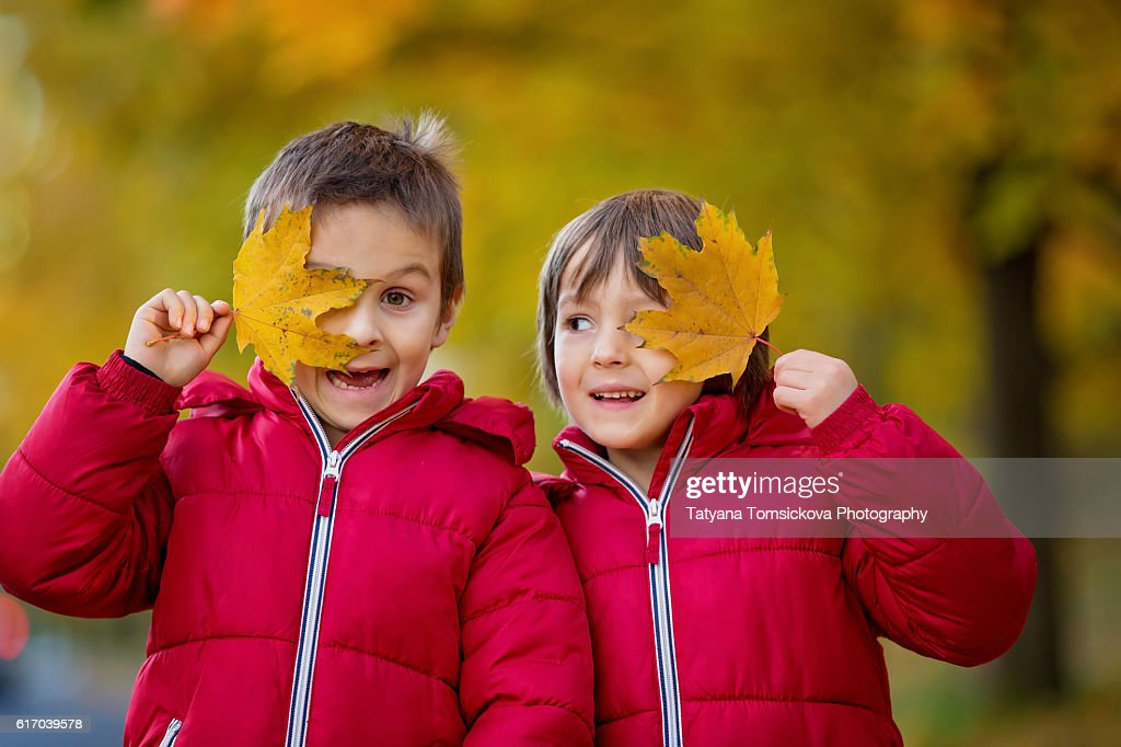 Two boys, brothers, playing in autumn alley in the park, gathering leaves, enjoying the sunny day. Children happiness concept : Stock Photo