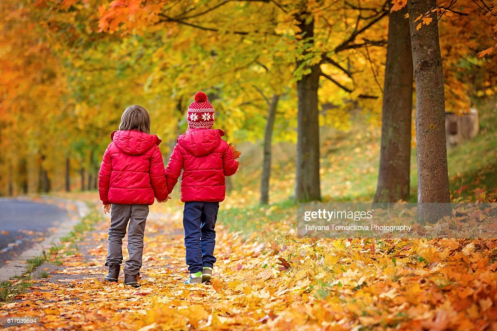 Two boys, brothers, walking in autumn alley in the park, gathering leaves, playing happily. Children happiness concept : Stock Photo