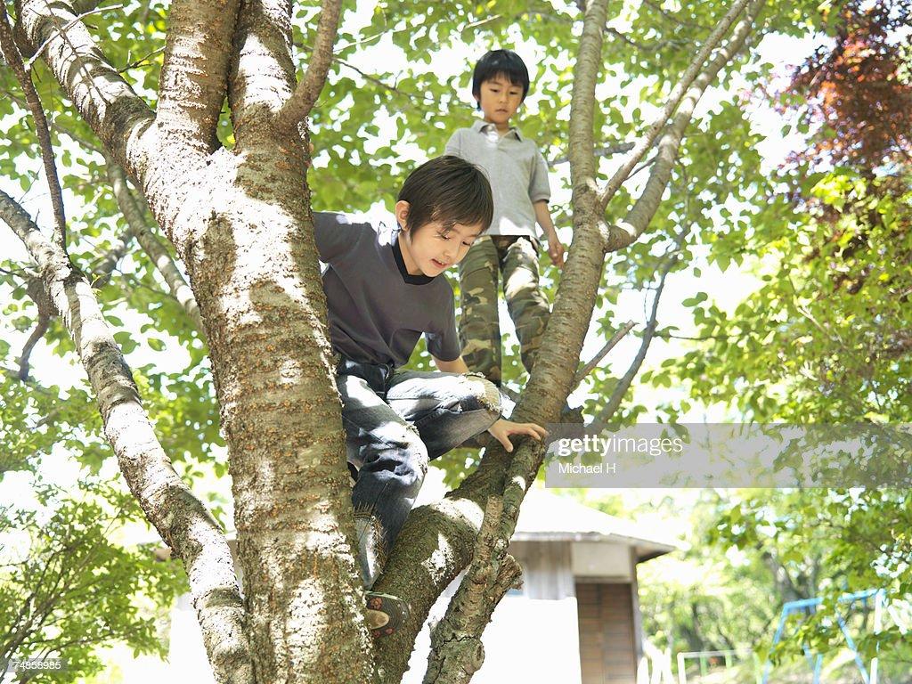 Two boys (5-7) climbing tree : Stock Photo