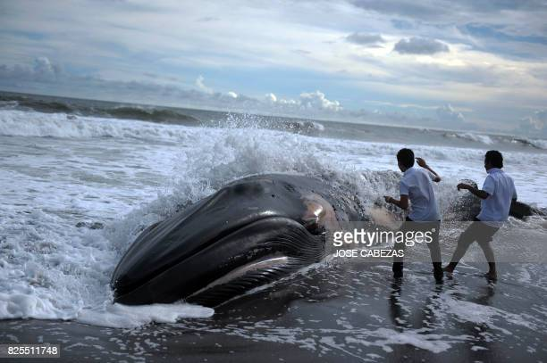 Two boys look at the body of a humpback whale at Toluca beach 50 km south from San Salvador on July 4 2011 AFP PHOTO/Jose CABEZAS / AFP PHOTO / Jose...