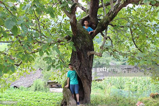 Two boys pose in an over 150 years hollow walnut tree seen on August 6 2014 in Dazhou Sichuan province of China